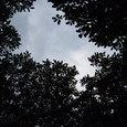 友達の木:空が・・・