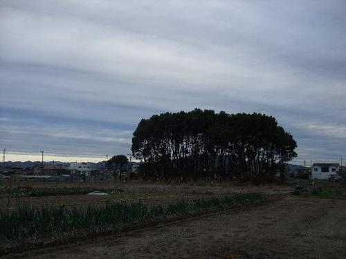 """""""こんもり林""""と空の雲"""