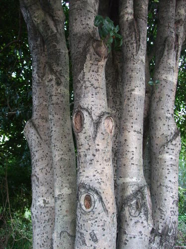 木の顔(金木犀)