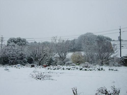 2008年2月9日:ゆき・雪・・・